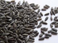 PHILIPPE JOUBERT Graines de tournesol 15kg